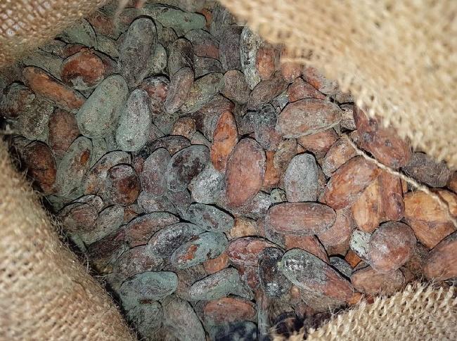 Boby kakaové inspekce