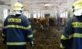 Výcvik kravín_11.jpg