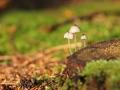Déšť potěšil houbaře. Z lesa nechodí s prázdnou