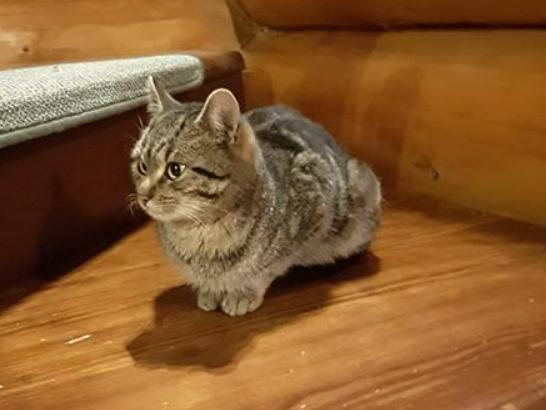 kočka nalezená Podhrad