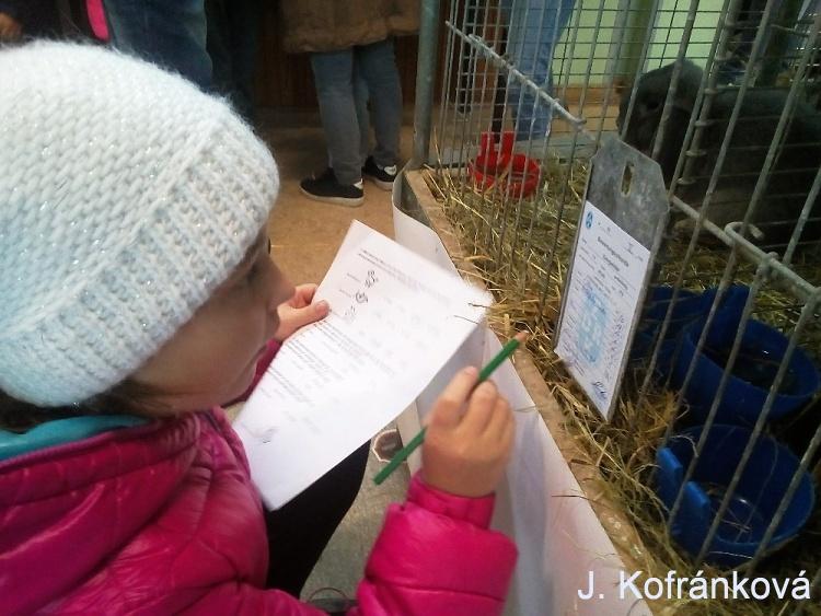 Kofránková škola holuby