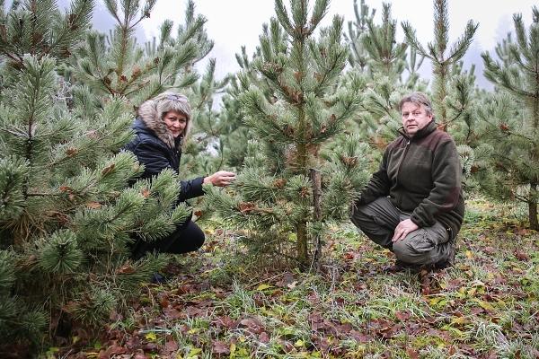 Lesoškolky stromky 1