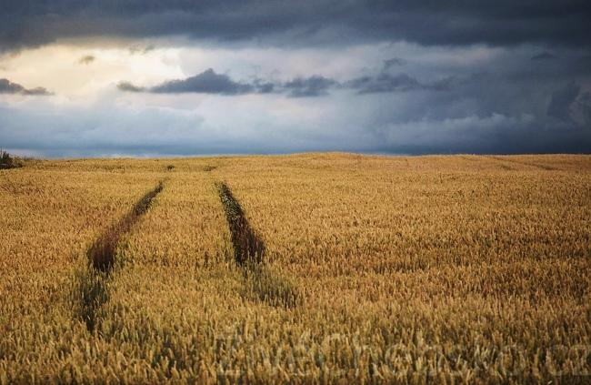 pole zemědělská půda WEB
