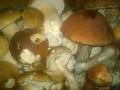w houby 5