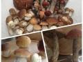 w houby 6
