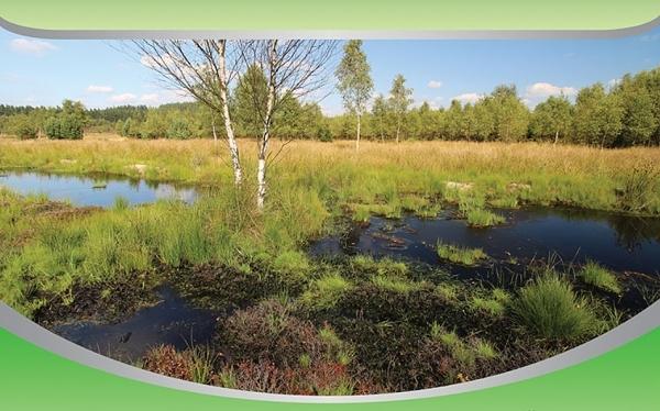 rašeliniště Krásenské příroda