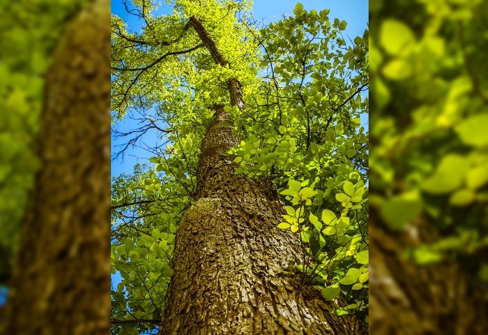 A-IMG_8534-na-web-strom
