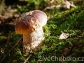 Mykologové zvou na vycházku za houbami