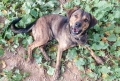 Útulek pro opuštěné a toulavé psy Cheb - PES K ADOPCI - Vasil