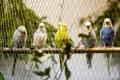 Výstava zvířat v Aši přilákala stovky lidí